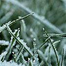 Even Grass can be Pretty by Gillian Cross