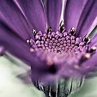 Purple Haze... by Bob Daalder