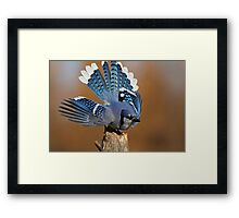 Fanning Out Framed Print