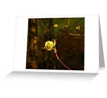 Dogwood Glow Greeting Card