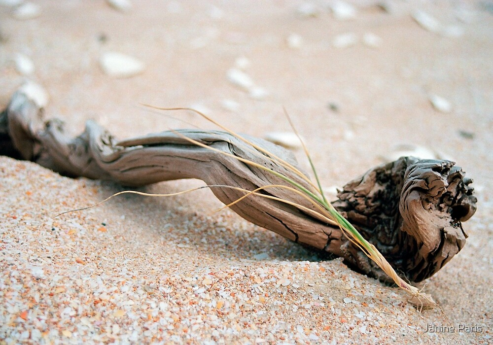 driftwood & grass (The Coorong) by Janine Paris