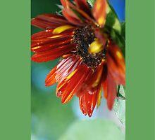 Summer Sunflower by lightman07