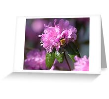 Bumble Bees LOVE Azaleas! Greeting Card
