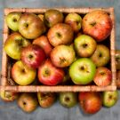 Windfall Apples. by Dave Hare