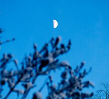 Moon Over. by tutulele