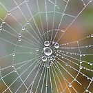 Web Dew by relayer51