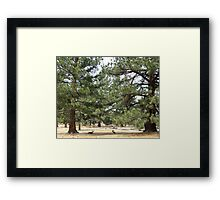 A Deer Moment  Framed Print