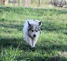 Flying Ears Sheila by goldnzrule