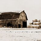 Triangle of Hay by Brian Gaynor