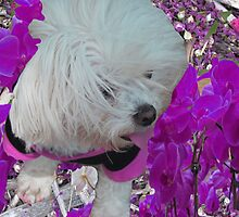 dogs-my friend Lola by NIKULETSH