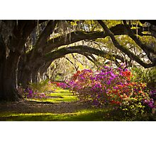 Charleston SC Magnolia Plantation Gardens - Memory Lane Photographic Print