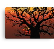 The Boab Sunset Canvas Print