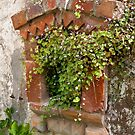 Overgrown Window by peterperfect