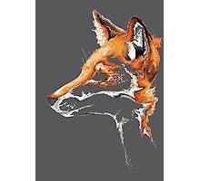 Fox Photographic Print