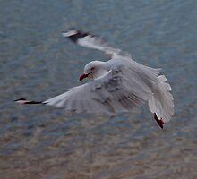 In-flight by sedge808
