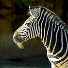 Old Zebra by Antoine de Paauw