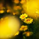 Spring time!  by Flux Photography