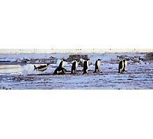 Emperor Penguins Coming Home Photographic Print