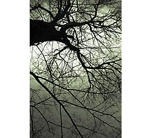 Greentree Photographic Print