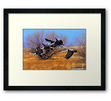 012211 Sandhill Cranes Framed Print