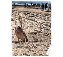 Pelican On The Beach Poster