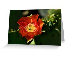 Orange Prickly Pear Blossom  Greeting Card
