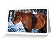 Mongol horse Greeting Card