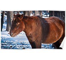 Mongol horse Poster
