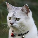 Cat Games by byronbackyard