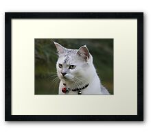 Cat Games Framed Print