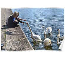 Feeding The Swans At Exeter Quay, Devon Poster