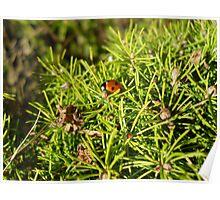 little miss ladybird Poster