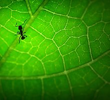Leaf Maze by shuttersuze75