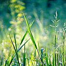 the grass is greener here, not at the other side by lensbaby