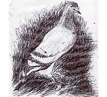 Pigeon/Copied internet photo -(310312)- black biro ink/A4 Photographic Print