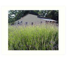 Lavender Hill Farm Art Print
