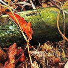Rust Colored Leaves ! by Jan Siemucha