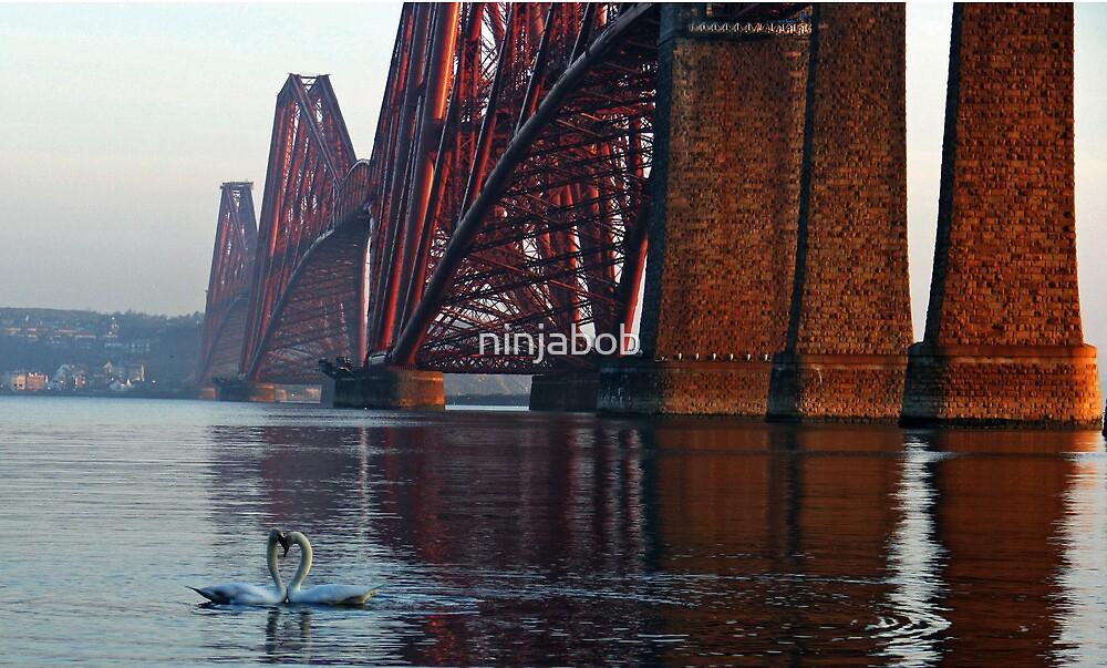 Swan  Love. by ninjabob
