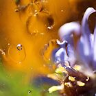 drowned flower by fotodelmar