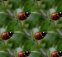 Ladybugs by WorlockMolly