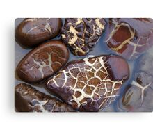 Turtle or Stone? Canvas Print