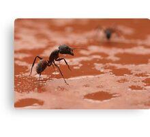Adam Ant? Canvas Print