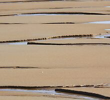 Sand Lines by Lynn Wiles