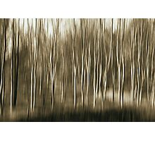 If you come down to the woods ..... Photographic Print