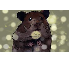 Hamster Photographic Print