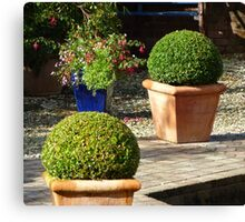 Box Topiary Canvas Print