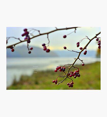""" Elder Berry River "" Photographic Print"