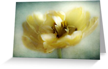 Yellow Tulip by Aj Finan