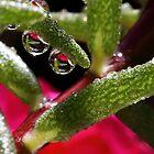 Droplets by PhotoTamara