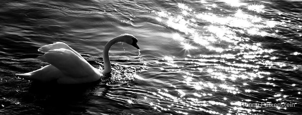 The white swan in the sundown by Ronny Falkenstein